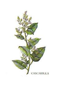 Kleine Gewürzfibel - Cascarilla