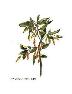 Kleine Gewürzfibel - Cayennepfeffer