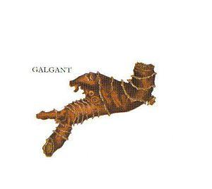 Kleine Gewürzfibel - Galgant