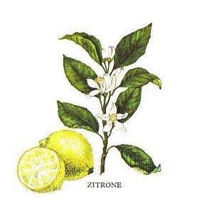 Gewürzfibel, Zitrone
