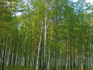 Die heilende Kraft der Bäume in Glaube und Tradition