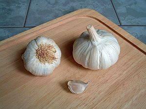 knoblauch, Knoblauch (Allium sativum) – eine der ältesten Kulturpflanzen