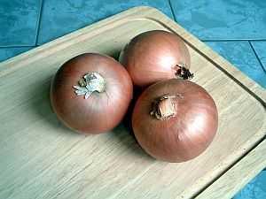Zwiebel (Allium cepa) – eine der ältesten Kulturpflanzen