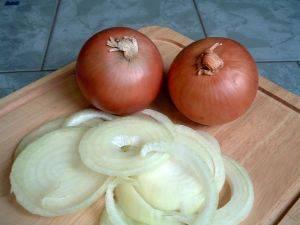 Zwiebel - eine der aeltesten Kulturpflanzen